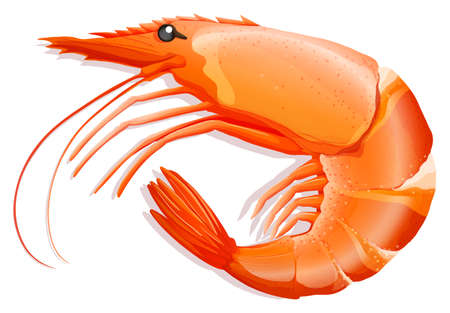 wild living: Close up cooked shrimp with skin on Illustration