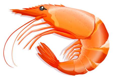 endangered: Close up cooked shrimp with skin on Illustration
