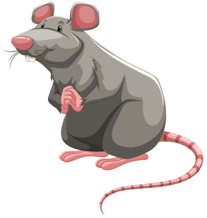 folded hands: Grey rat standing with folded hands