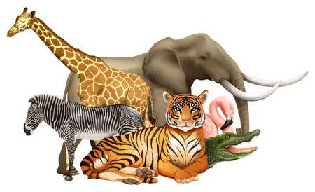 wildlife: Different kind of wildlife animals