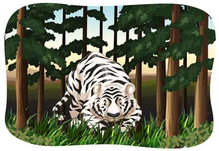 tiger white: Tigre bianca che cammina nella giungla