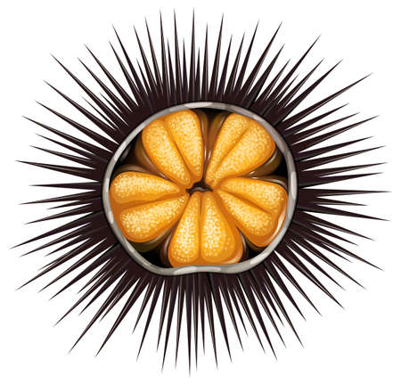 sea urchin: Inside of urchin in shell full of spikes