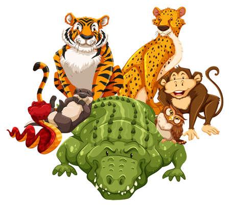 nutria caricatura: Diferentes tipos de animales de la fauna Vectores