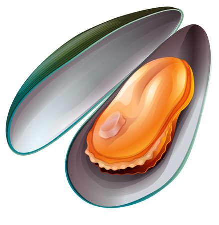 cozza: Close up cozza con le coperture