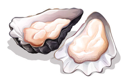 ostra: Ostras frescas en la cáscara