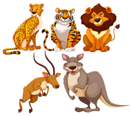 carnivore: Set of wildlife animals in different position
