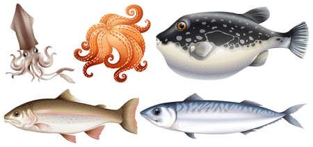 Différents types de fruits de mer frais
