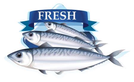 sardinas: Sardinas frescas con la ilustración del texto Vectores