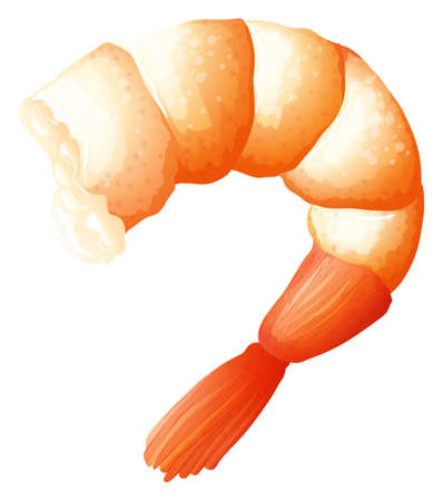 Shrimp tail on white illustration
