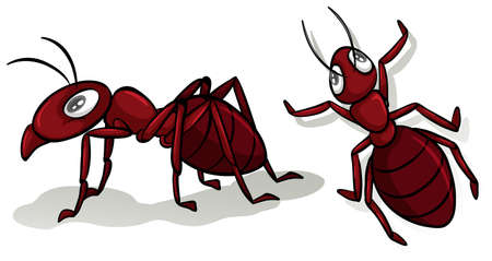 two animals: Simple red ants on white illustration