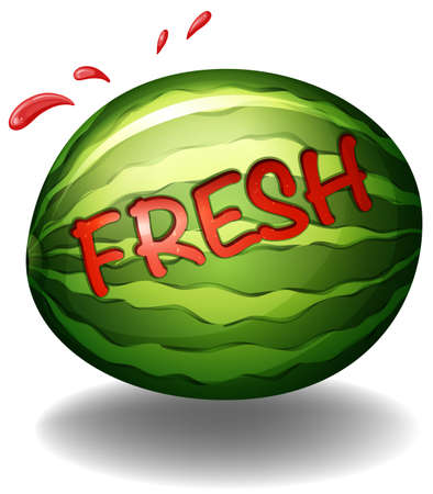 wordings: Flashcard of a water melon with a text fresh on it