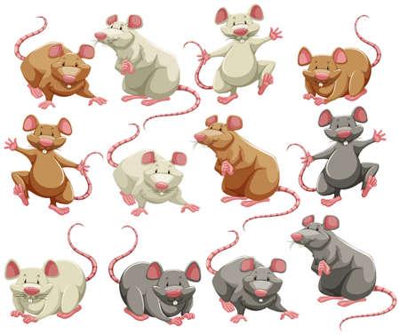 zvířata: Myš a krysa v různých barvách Ilustrace