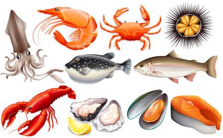 peces caricatura: Diferentes tipos de pescados y mariscos frescos