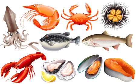 fresh seafood: Different kind of fresh seafood