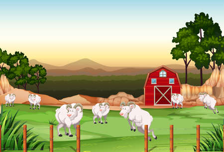 farm land: Goats living in the farm land