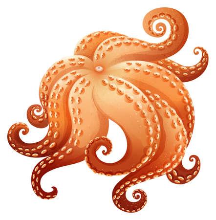 legs up: Close up giant octapus legs Illustration