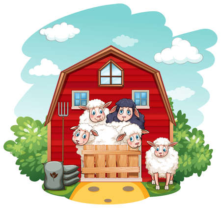barns: Sheeps in the barn at daytime