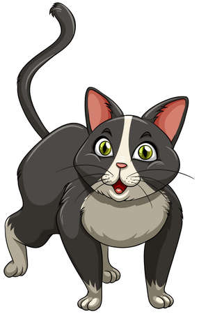 grey cat: Grey color cat standing alone on white background Illustration