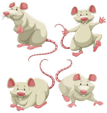 rata caricatura: Cuatro ratones blancos que realizan diferentes acciones sobre fondo blanco