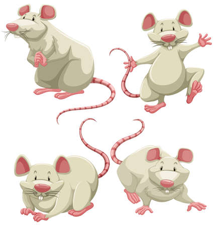 Four white mice doing different actions on white background