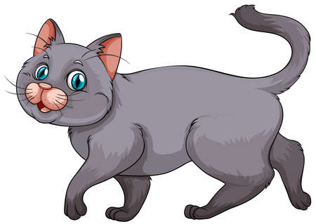 cuddly baby: Young gray kitten on white illustration