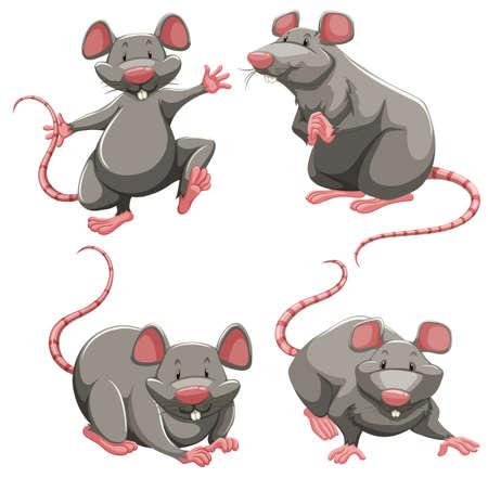 myszy: Szary szczur w różnych pozach ilustracji