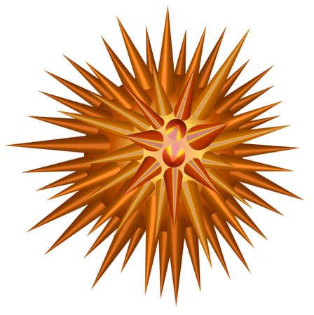 sea urchin: Throny ball on white illustration