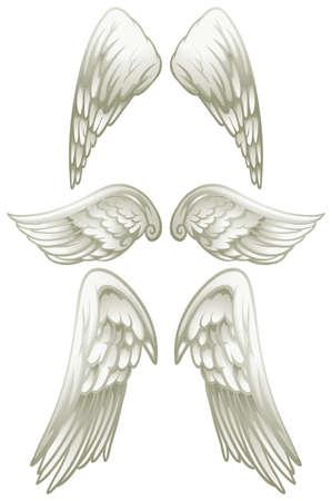 Angel wings on white illustration