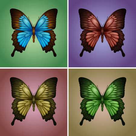 species living: Butterflies in four colors illustration