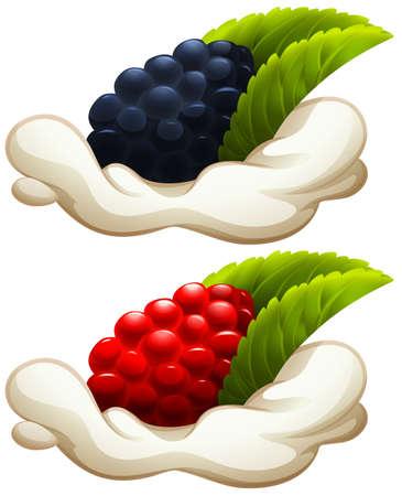 rasberry: Rasberry and blackberry on cream illustration