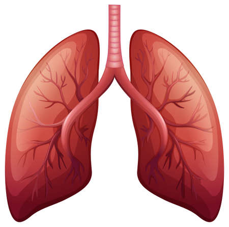human lung: Lung cancer diagram in detail illustration