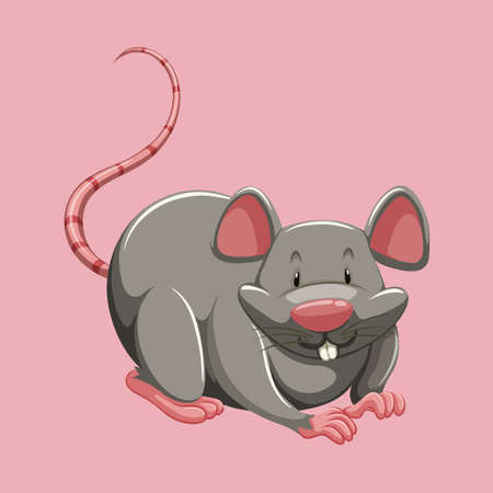 dirty teeth: Gray rat on pink illustration Illustration