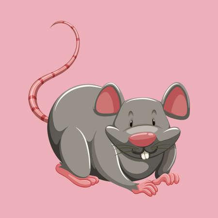 dientes sucios: Rata gris en la ilustración rosada