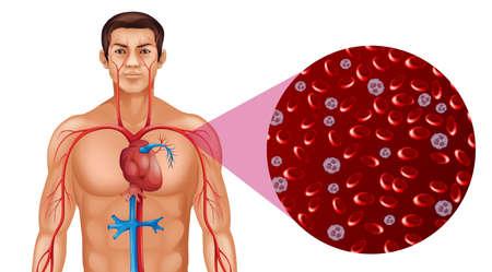 Bloedcirculatie in menselijk illustratie Vector Illustratie