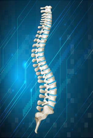 spine surgery: Human spine diagram on blue illustration Illustration