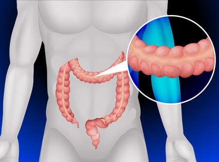 human body: Large intestine in human body illustration