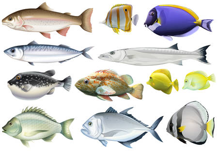 Different kind of ocean fish illustration Çizim