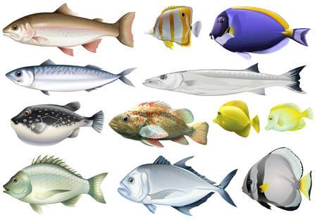 Verschiedene Arten von Meeresfischen illustration