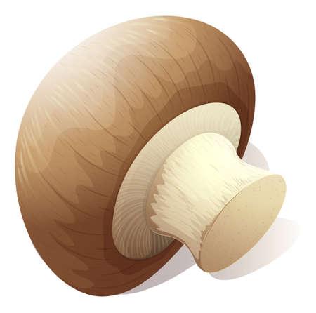 raw material: Single mushroom on white illustration Illustration
