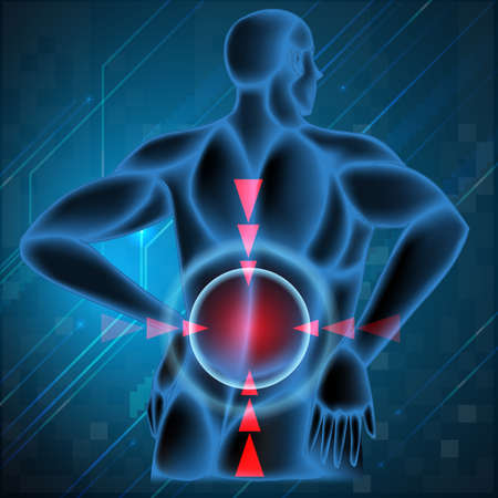 spine pain: Columna vertebral humana que muestra la espalda ilustraci�n dolor