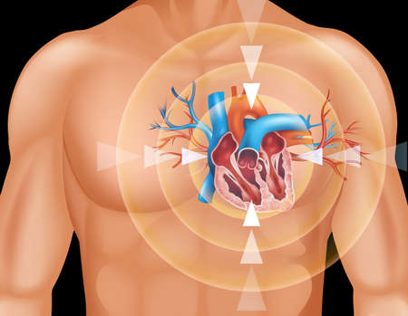 Human heart in close up diagram illustration