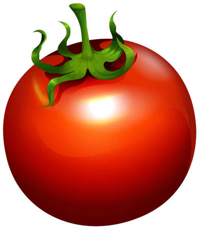 tomatoes: Fresh tomato with stem on illustration