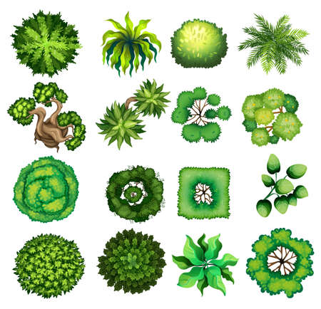 of view: Top view of different kind of plants illustration