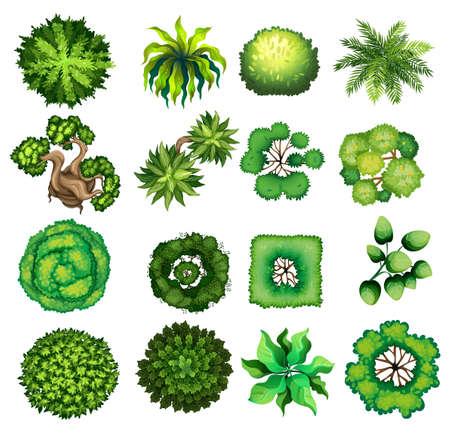 arboles caricatura: Vista superior de diferentes tipos de plantas de ilustración