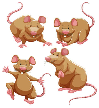 small group of objects: Brown rat in different poses illustration Illustration