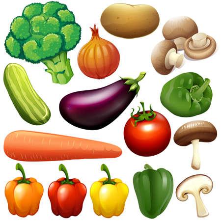 Diferentes tipos de hortalizas frescas ilustración Foto de archivo - 44789429