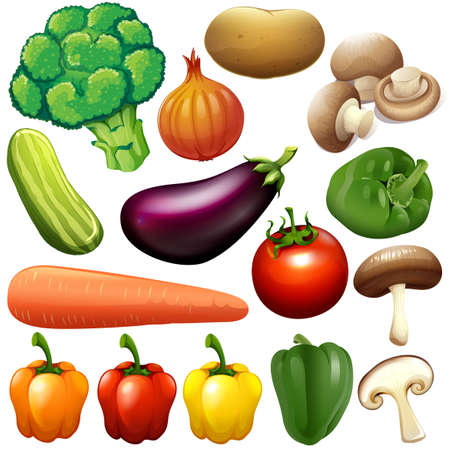 Different kind of fresh vegetables illustration Çizim