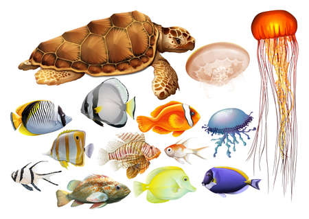 Different kind of sea animals illustration Ilustração