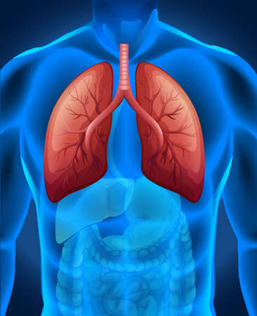cancer de pulmon: El c�ncer de pulm�n en la ilustraci�n humana