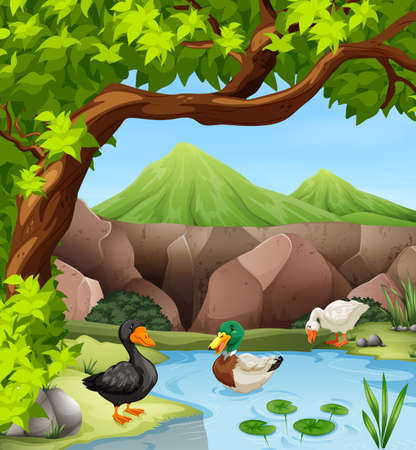 ponds: Ducks swimming in the pond illustration